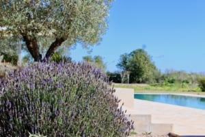 Kleine Version von: ISLA Finca 02 Campos Blick Pool