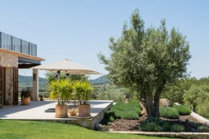 Kleine Version von: ISLA Finca 03 Felanitx Garten