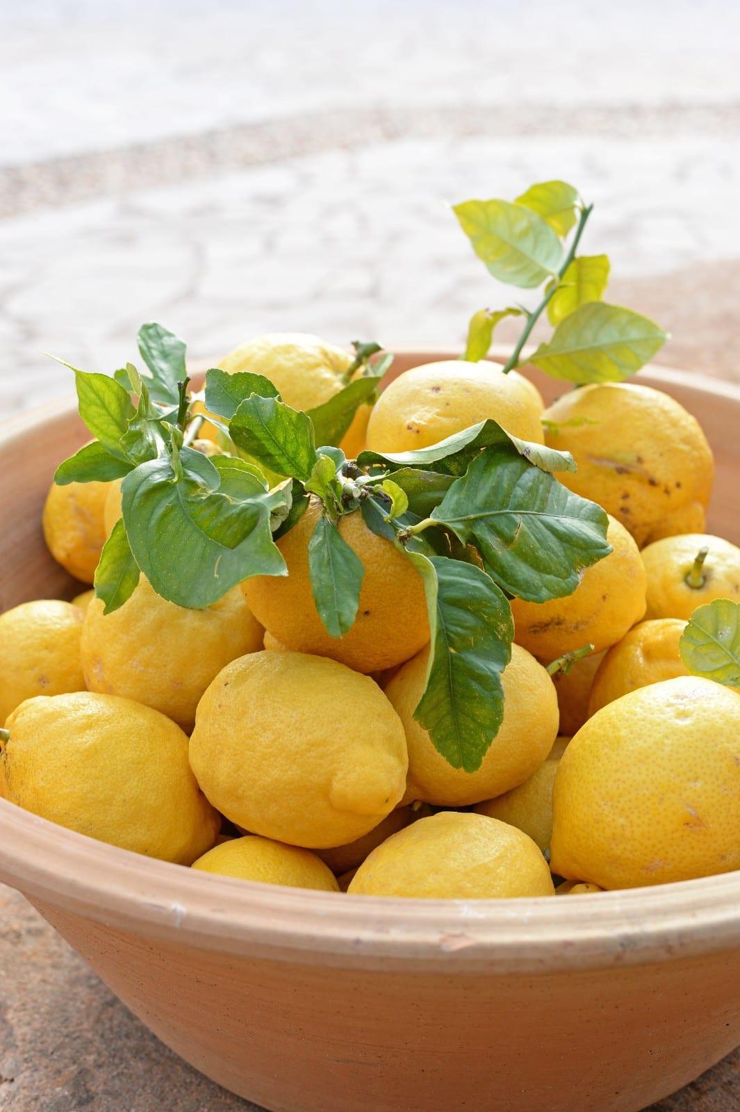 ISLA Finca Sa Pletassa Zitronen