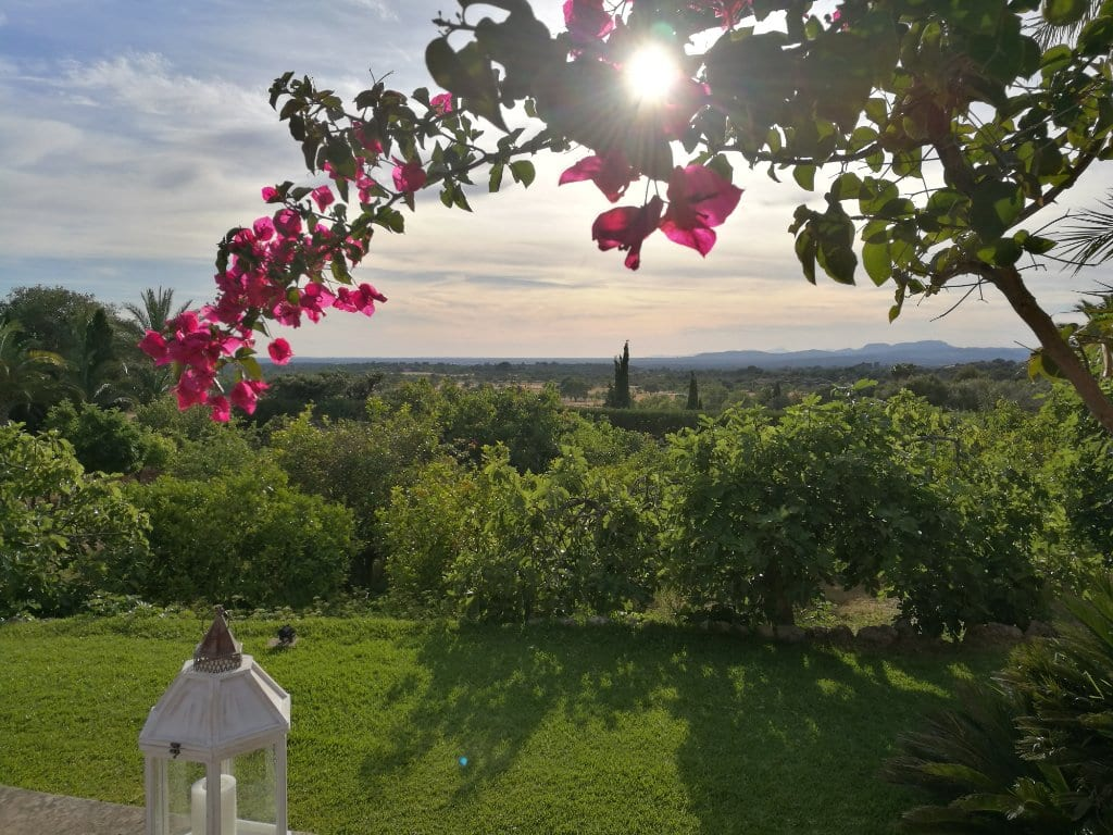 ISLA_Travel_Hotel_SON TERRASSA_vista