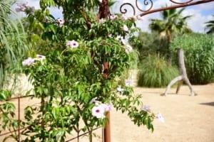 Kleine Version von: ISAL-Travel-Amapola-Garten4 (1)