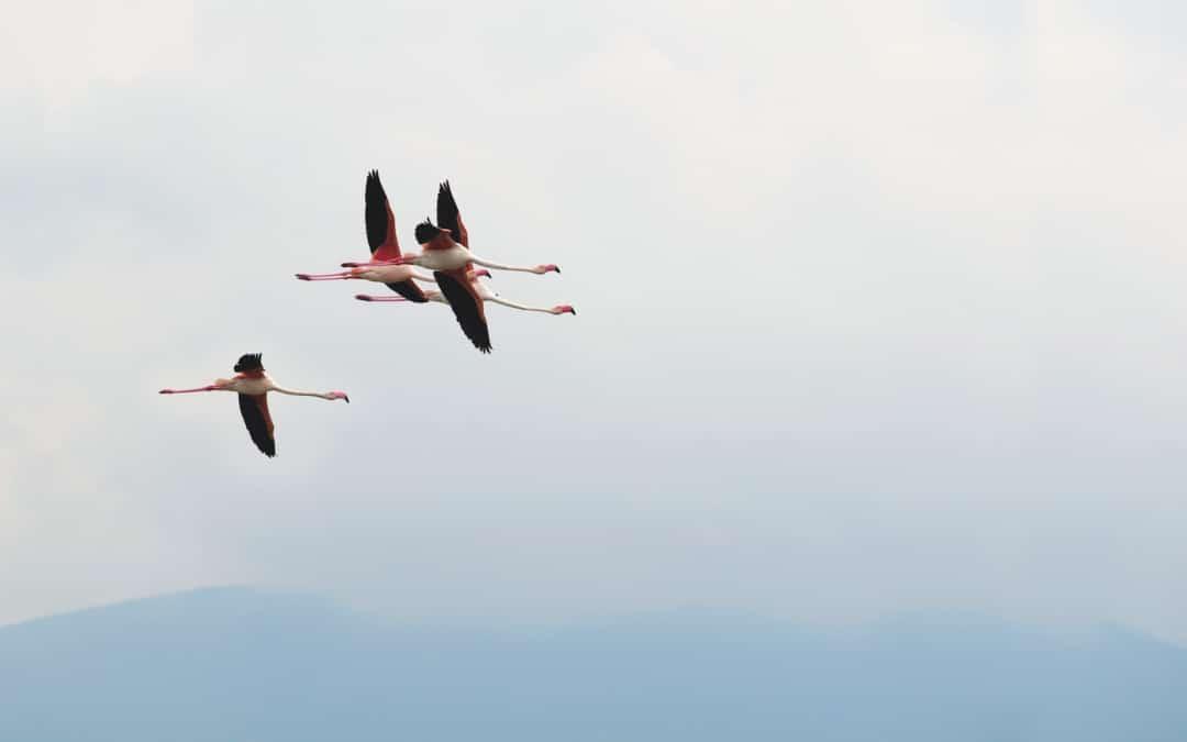 Tschüss Flamingos!